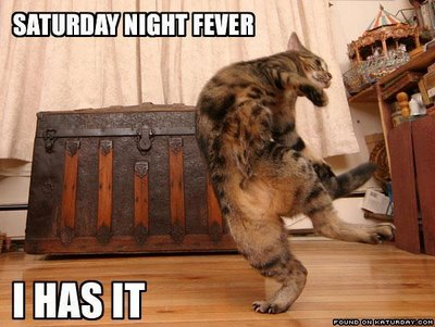 SaturdayNightFeverCAT